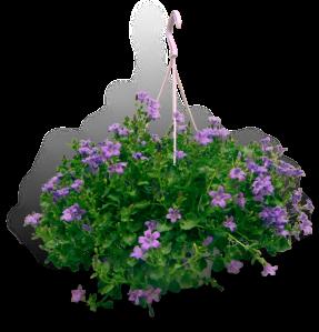 tuinplanten-zomer-campanula-catharina-productfoto_SHADOW
